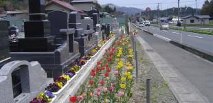 春爛漫(^O^)